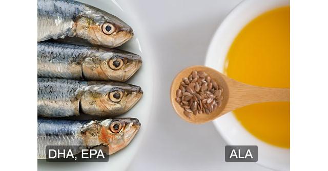 fish oil vs seed oil