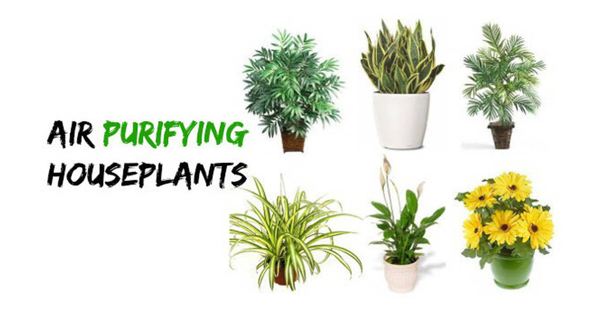25 Indoor Plants That Can Filter Air Pollutants Out Of Your Home And Improve Quality