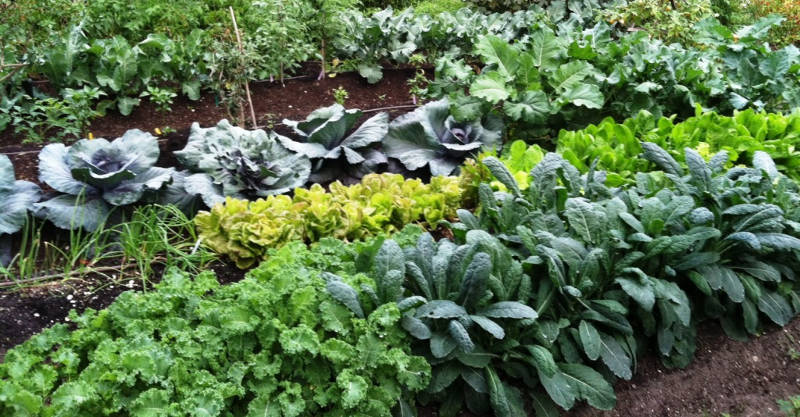 7 Best Ways To Make Your Own Compost To Grow Gigantic
