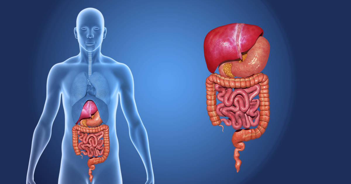12 Surprising Facts About Your Digestive System