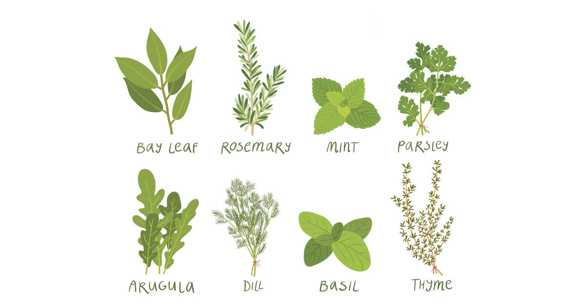 Natural medicines for memory loss picture 1