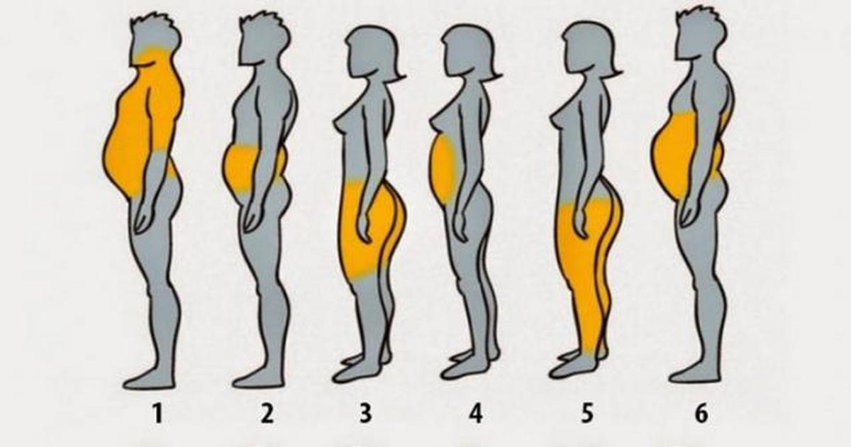 How does fat look like in human body