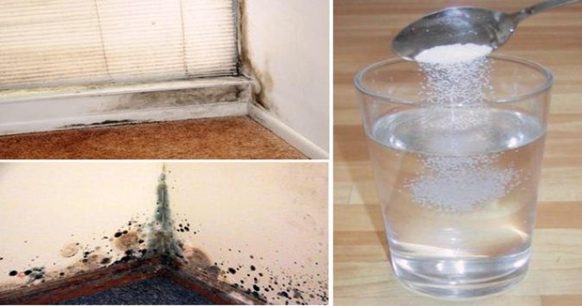 5 natural ways to remove mold in your home - Natural ways remove mold ...