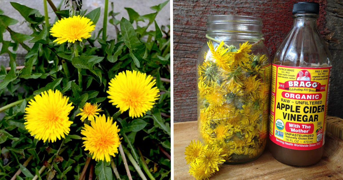 20 Little Known Uses For Dandelions From Baking And Pain Relief To Quickly Removing Warts