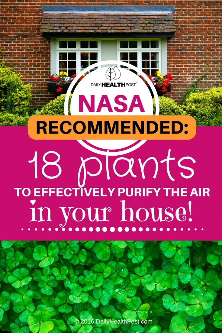 Nasa Recommended 18 Plants To Effectively Purify The Air