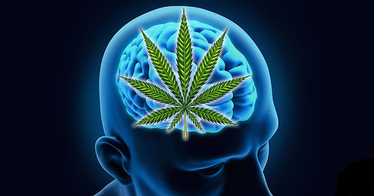 Конопля и мозг как бросить коноплю курить